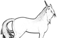 Yksisarvinen / Unicorns